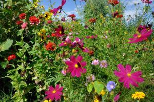 Los Poblanos Flowers