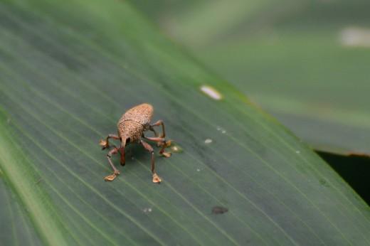 Crazy-looking Bug