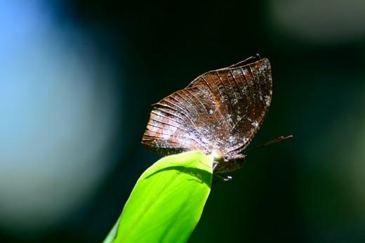 Memphis Butterfly