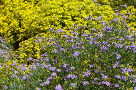 Abiquiu Wildflowers
