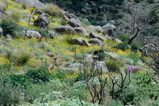 Post-monsoon Flowers